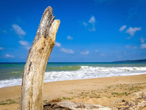 Dry tree trunk sea beach wave coast summer blue sunny sky Royalty Free Stock Image