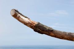 Dry tree trunk with the sea horizon Stock Photo