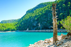 Dry tree trunk on the shore of a mountain lake Royalty Free Stock Photos