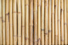 Dry tree trunks a bamboo аbstract background Royalty Free Stock Images
