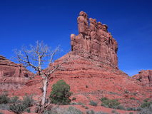 Dry tree in the Valley of the Gods Royalty Free Stock Image