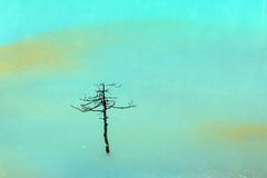 Dry tree water Royalty Free Stock Photography