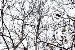 Dry tree Stock Photography