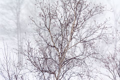 Dry tree in winter Royalty Free Stock Image