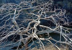 dry tree with wood structure and the river. picture taken lakhnadon India February 2018, landscape royalty free stock photography