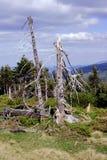 Dry trees Royalty Free Stock Photo