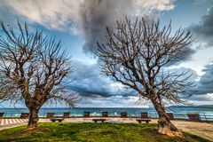 Dry trees in Alghero seafront Royalty Free Stock Photography
