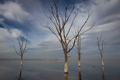 Dry trees in the city of Epecuen. Salt lake that caused devastating floods royalty free stock photos