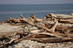 Dry trees on coast Stock Photography