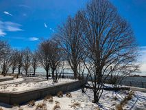 Dry trees on a cold day royalty free stock photography