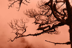 Dry trees in the forest Stock Images