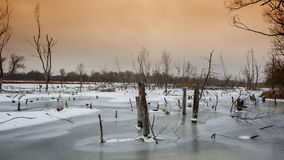 Dry trees in a frozen river Royalty Free Stock Photography