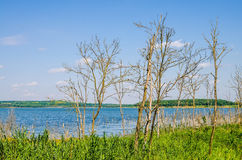 Dry trees growing next to a river Stock Image