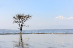 Dry trees in lake Royalty Free Stock Photography