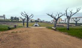 Dry trees Royalty Free Stock Photos
