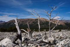 Dry trees in the middle of the stone field. Stock Photo