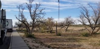 Dry trees Rest Area Arizona stock photo