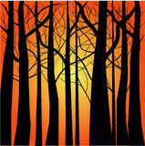 Dry trees silhouettes Stock Image