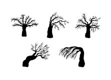 Dry trees silhouettes Stock Images