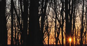 Dry trees in the spring against the sunset.  stock footage