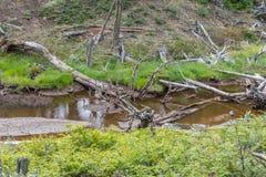 Dry trees and stream, Tierra del Fuego National Park. Ushuaia, Argentina Stock Photo