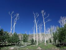 Dry trees in Utah Royalty Free Stock Photography