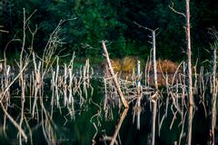 Dry trees in water Stock Photography