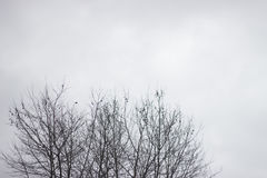 Dry treetop in winter stock images