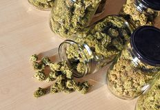 Dry and trimmed cannabis buds stored in a glas jars. Royalty Free Stock Photo