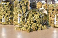 Dry and trimmed cannabis buds stored in a glas jars. Royalty Free Stock Images