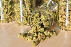 Dry and trimmed cannabis buds stored in a glas jars. Stock Photography
