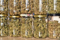 Dry and trimmed cannabis buds stored in a glas jars. Stock Photo