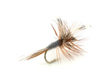 Dry trout fishing fly Royalty Free Stock Photos
