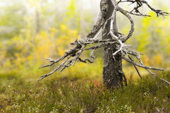 Dry trunk of dead tree Stock Photos