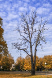 Dry Trunk Of Old Oak In Autumnal Park Royalty Free Stock Photos