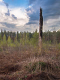 Dry trunk stands on meadow Royalty Free Stock Photos