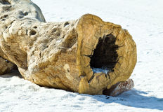 Dry trunk on white sand Royalty Free Stock Photos