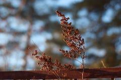 Dry twig Royalty Free Stock Photos