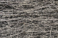Dry twigs. Stock Images