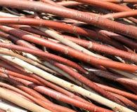 Dry Twigs Stock Image