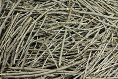 Dry twigs. Gray abstract texture Stock Image