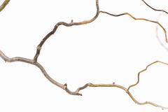 Dry twigs on a white background. Royalty Free Stock Photo