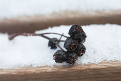 Dry up black berries on the wooden snow covered bench. Retro (pastel) colors. Stock Image