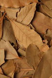 Dry vanilla leaves Royalty Free Stock Images