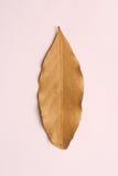 Dry vanilla leaves Stock Image