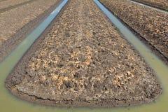 Dry vegetable plot. Stock Photography