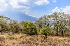 Dry vegetation & Agua volcano behind, Antigua, Guatemala. Dry vegetation at end of dry season & Agua volcano behind Volcán de Agua outside Antigua, Guatemala royalty free stock images