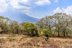Dry vegetation & Agua volcano behind, Antigua, Guatemala royalty free stock images