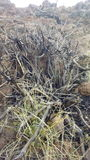 Dry vegetation Royalty Free Stock Photography