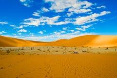 The Vlei in desert and dunes, Namibia. Orange dunes in Sossusvlei, Namibia royalty free stock image